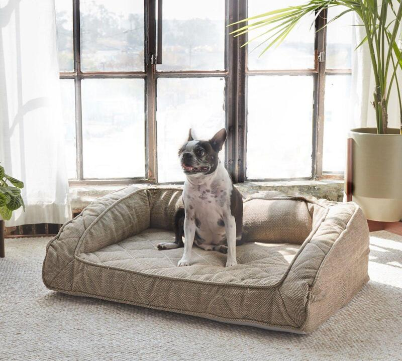 A french bulldog sitting in the Brentwood Home Pet Bed