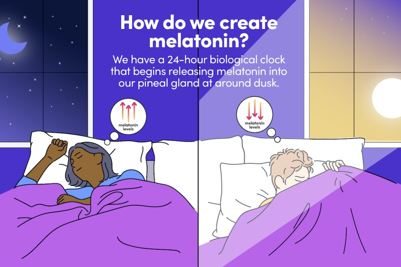 Infographic showing how natural melatonin rises at night and goes down in the morning, in accordance with light exposure