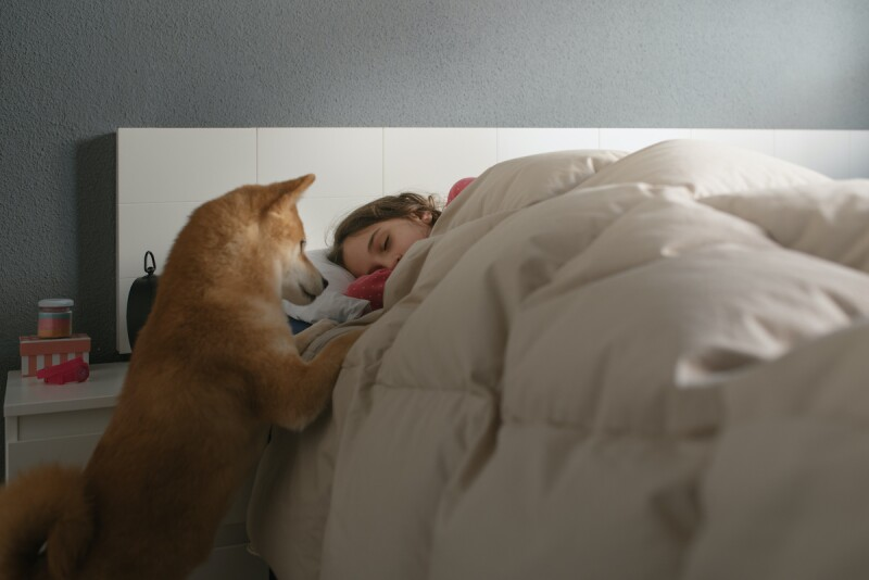 Close up of a dog trying to wake up its owner in the morning