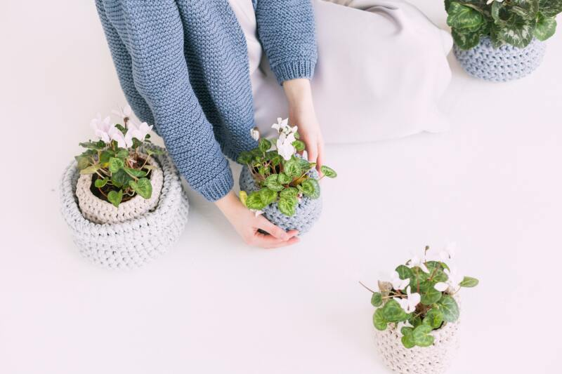 person-in-blue-sweater-holding-green-potted-plant-709785.jpg